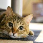 キャットフードは安全性を第一に! おすすめ猫の餌BEST10
