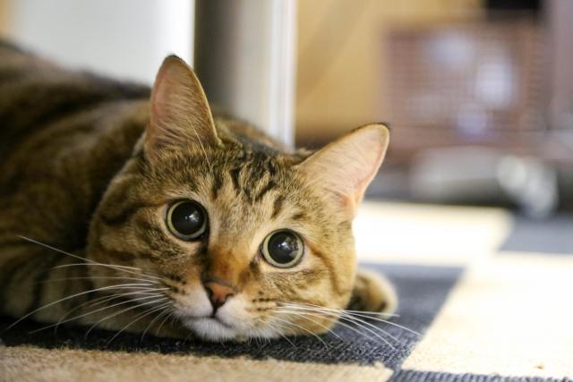猫ちゃんが喜ぶ安全・無添加キャットフードおすすめBEST10
